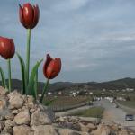 Tulip square- Ashraf 3, Albania