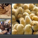 Iran Kills 16 Million Chicks